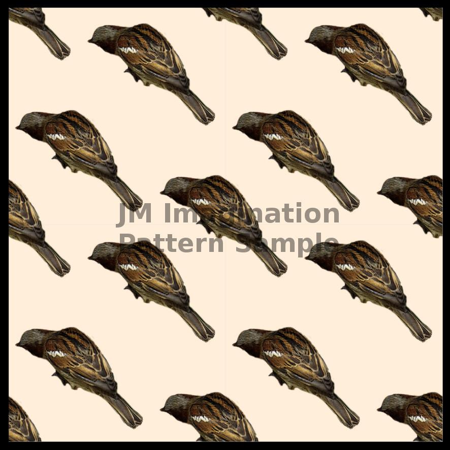 7 Sparrow 2.jpg